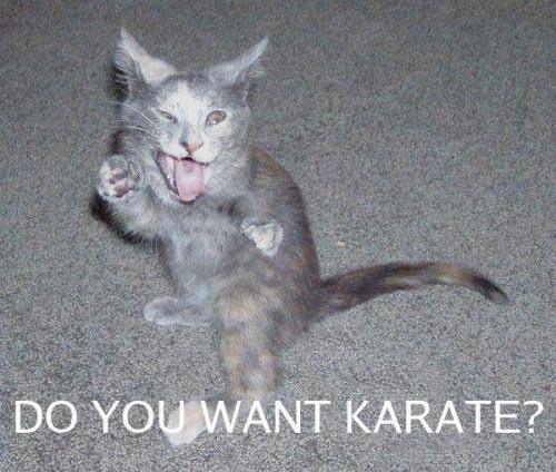 karate 500x424 Do you want karate? lolcats