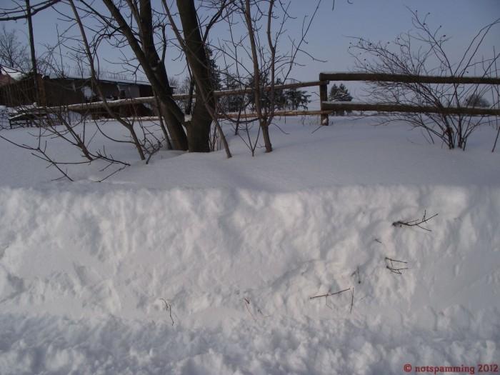 waist deep 700x525 Winter Pt.1 Politics Nature