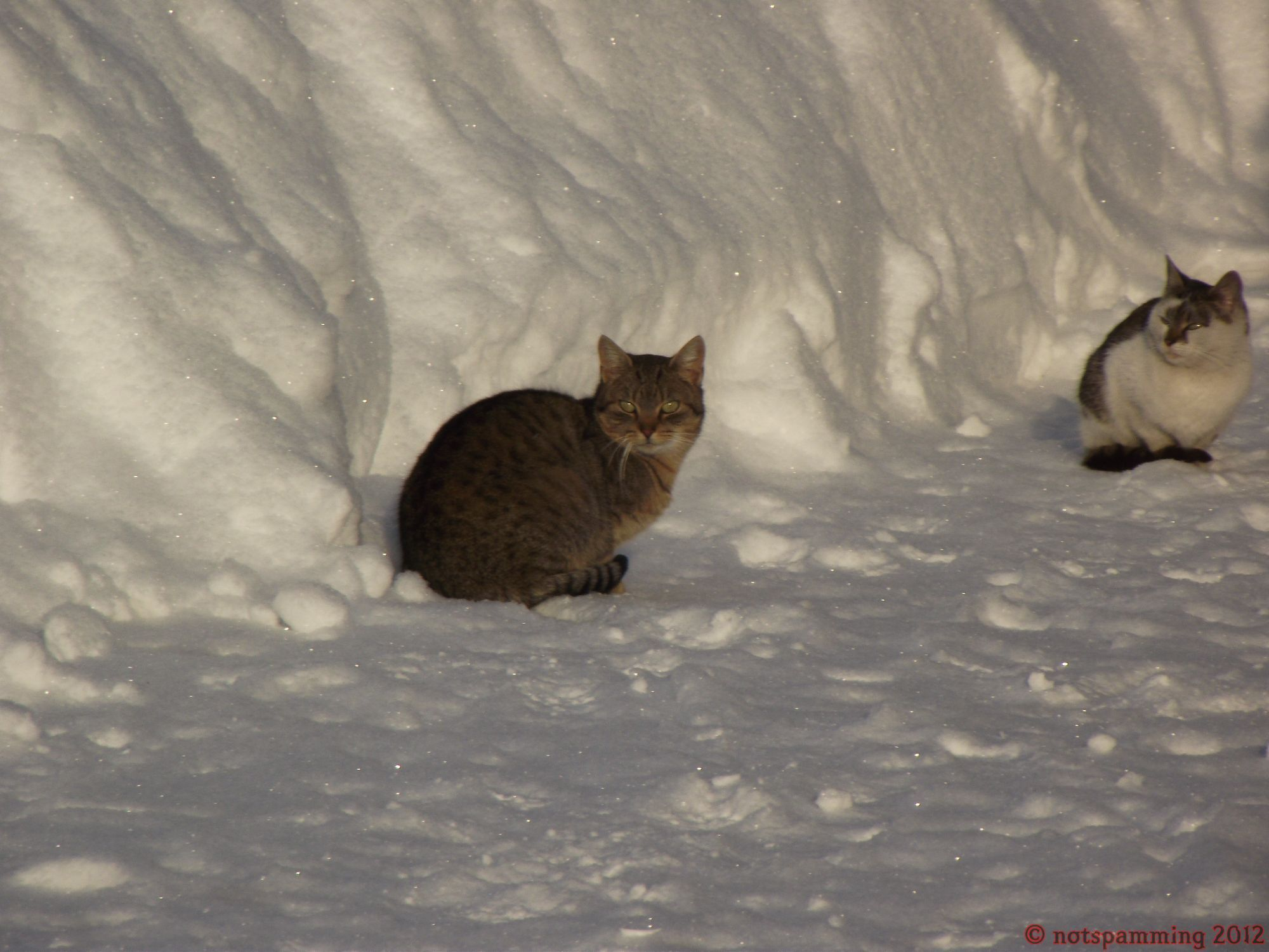 snow_cat2.jpg