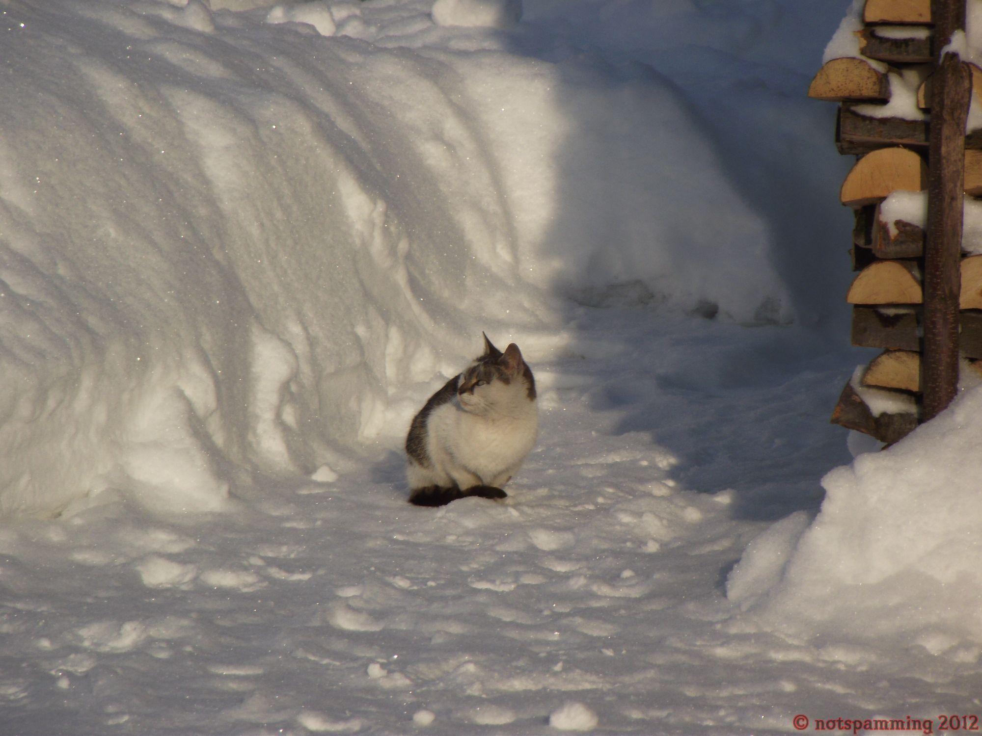 snow_cat3.jpg