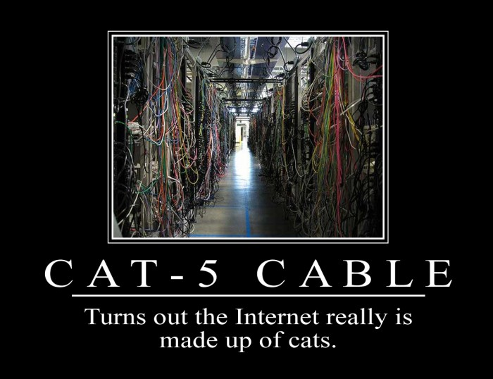 cat-5.jpg (236 KB)