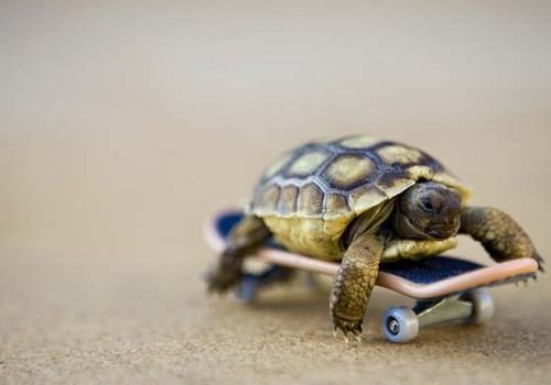 super turtle Cute As Hell Animals Awesome Things