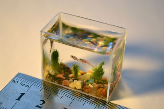 Anatoly Konenko aquarium miniature02 Worlds smallest aquarium