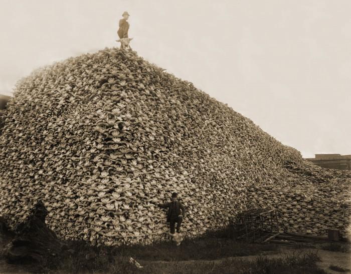 Bison_skull_pile-restored.jpg (3 MB)