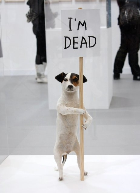 protesting_dog.jpg (85 KB)