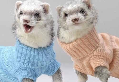 tumblr m0g09lpJNJ1qik2lko1 500 turtle necks on ferrets
