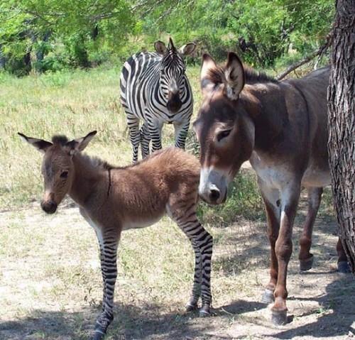 zebrass.jpg (104 KB)