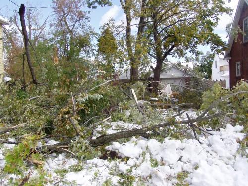 P1010130 500x375 October Storm wtf Nature