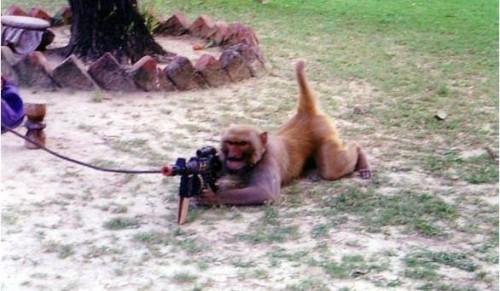 Commando-Monkey.jpg (107 KB)