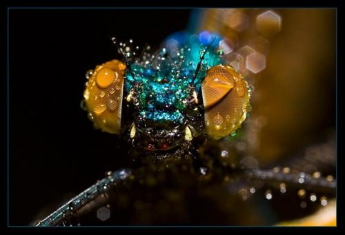 horsefly.jpg (59 KB)