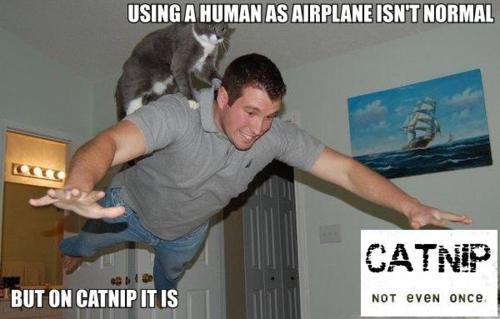tumblr lezcktnKk61qeljpgo1 500 Catnip. Not Even Once. lolcats Humor 420