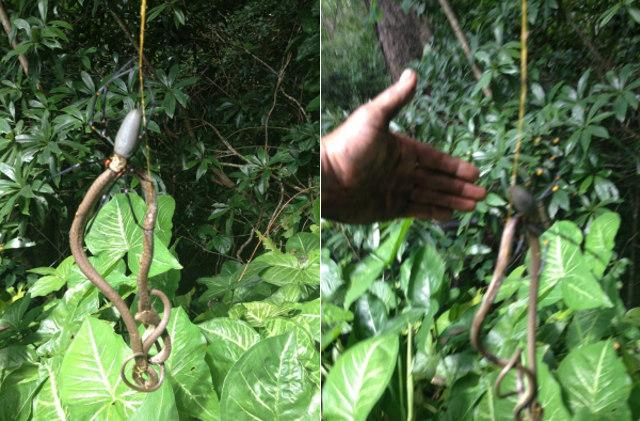 snake-eating-spider-2.jpg