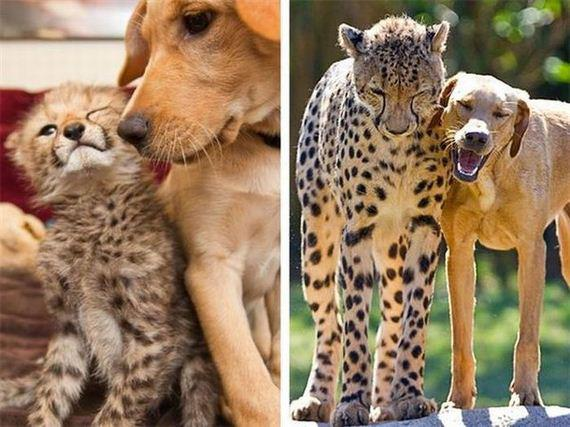 cheeta dog Best Friends Cute As Hell Animals