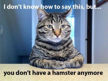 Hamster.jpg (28 KB)