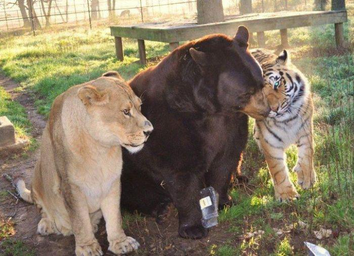 Lions-and-Tigers-and-Bears.jpg (74 KB)