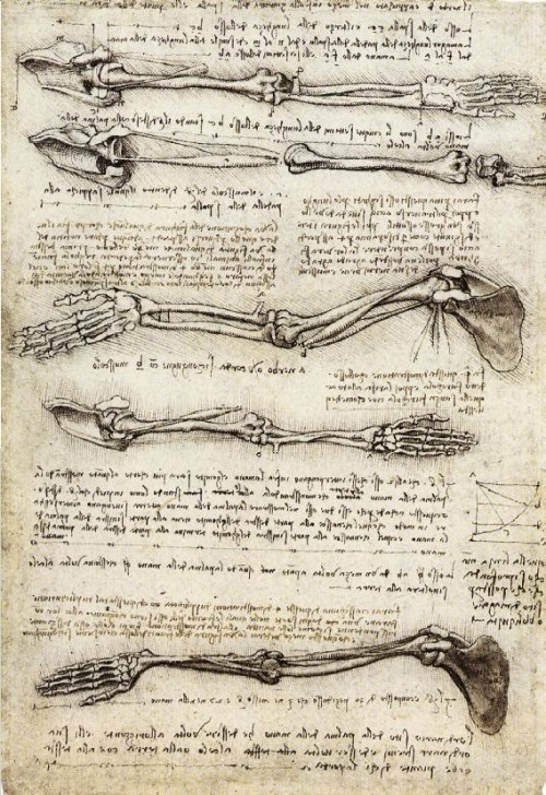 Studies_of_the_Arm_showing_the_Movements_made_by_the_Biceps.jpg (149 KB)