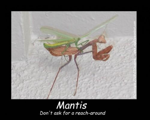 mantis.jpg (70 KB)