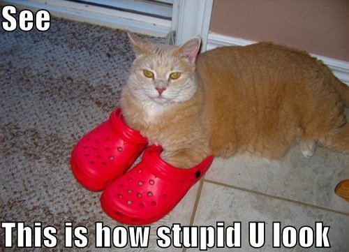 funny-pictures-red-shoes-cat-stupid.jpg (127 KB)