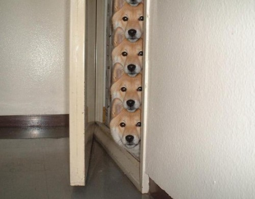 Dogs Are Watching You.jpg (38 KB)