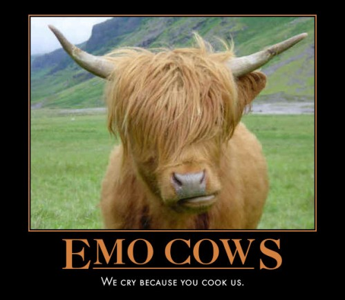 emo cow 499x435 Emo Cows Humor Cute As Hell Animals