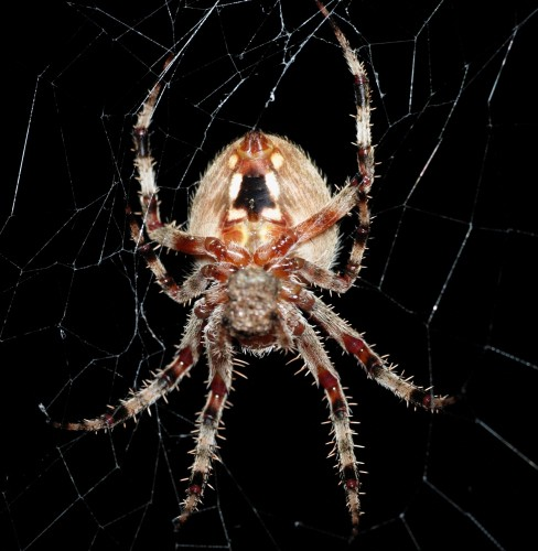 spider.jpg (976 KB)
