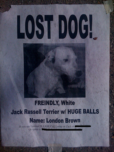 lost dog Lost Dog   Huge Balls Humor