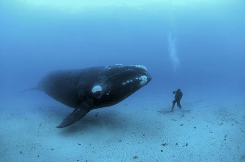 Hanging With a Whale.jpg (53 KB)