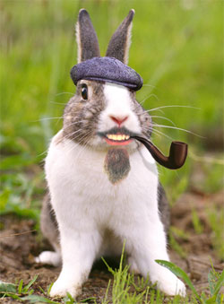 bunny.jpg (22 KB)