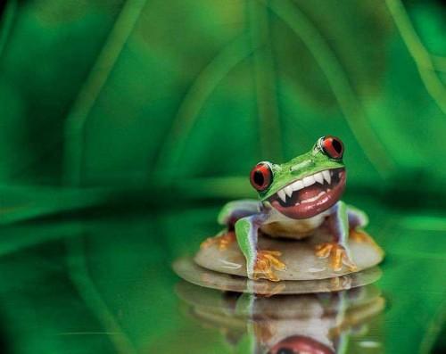 cute-frog.jpg (26 KB)