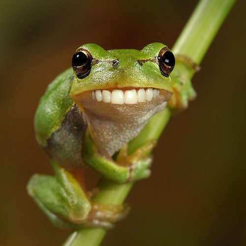 funny-frog.jpg (35 KB)