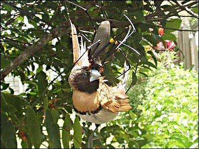easpider122a Bird Eating Giant Spider wtf Nature