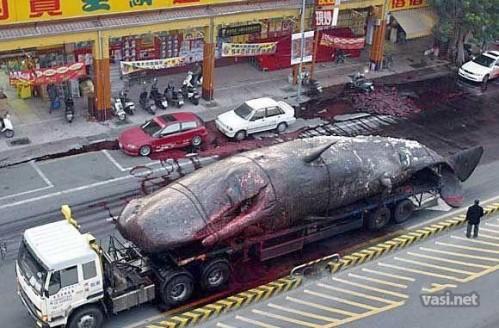 1224751012 1 499x328 Whale Waste wtf