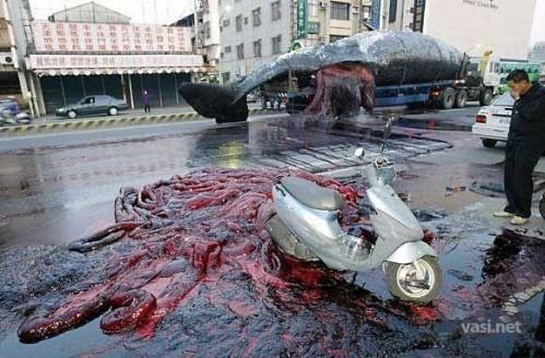 1224751012 1 1 499x328 Whale Waste wtf
