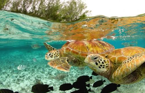turtle1.jpg (231 KB)