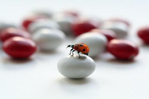 Ladybug.jpg (73 KB)