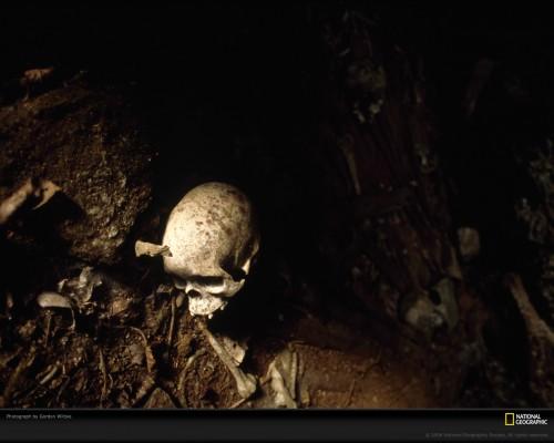 skull-wiltsie-691189-xl.jpg (268 KB)