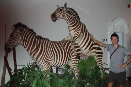 Zebra Sex Exhibit.jpg (78 KB)