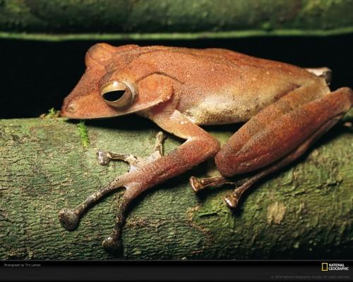 tree-frog-laman-732793-xl.jpg (344 KB)