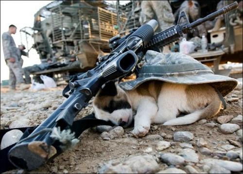 Doggie.jpg (81 KB)
