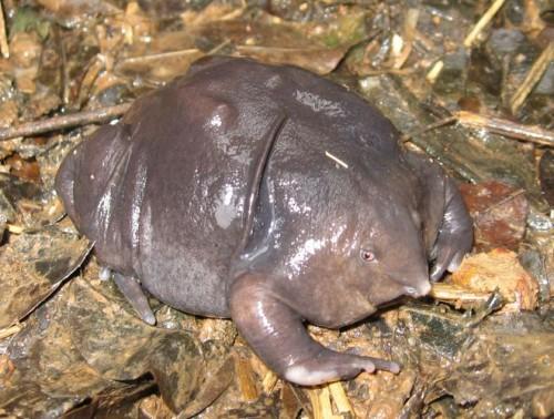 purplefrog.jpg (97 KB)