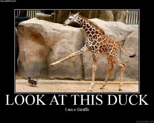 look at duck 500x400 Look At This Duck Humor forum fodder
