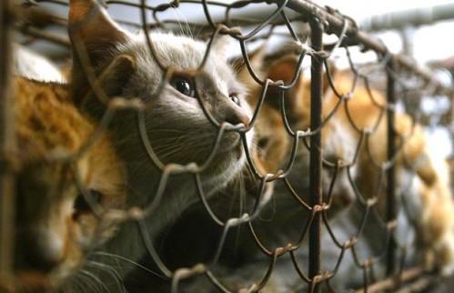 caged-cats_1209239i.jpg (40 KB)