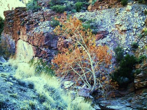 PHTO0023 500x375 Queen Creek Canyon Nature