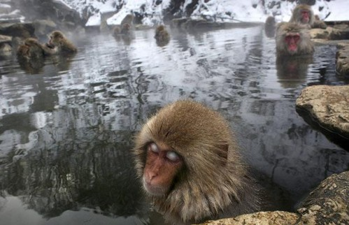 ice-monkeys_1212843i.jpg (49 KB)