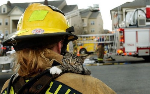 RescudeCat 499x313 Rescued cat Humor
