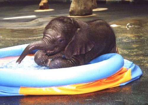 babyelephant.jpg (70 KB)