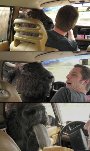 Buffalo Tongue.jpg (161 KB)