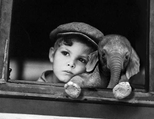 day Dreaming Day Dreaming With His Pet Elephant wtf Cute As Hell Animals