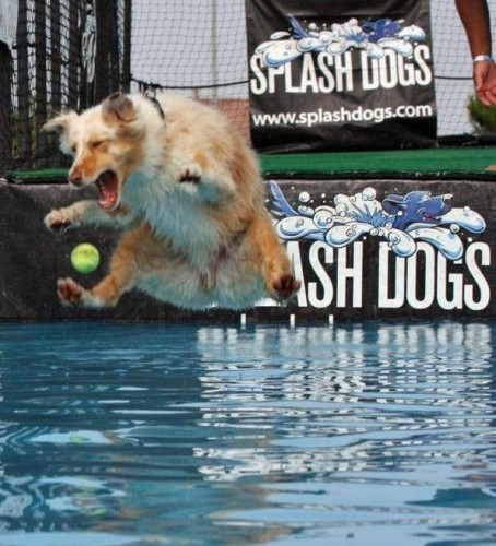 Splash Dog.jpg (99 KB)