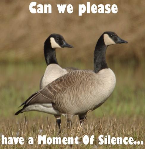 geese1.jpg (217 KB)